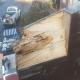 abgetragenes Holz eines maroden mit Pilz befallen Holzkreuzes zur Feststellung des Schadenumfangs